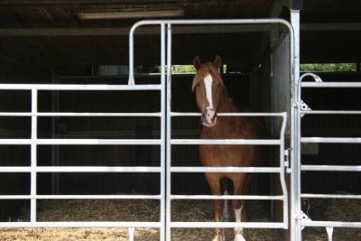 Pferd in Reitanlage Teitscheid